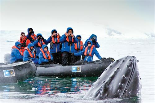 Gallery Image Whales_in_Antarctica_from_zodiac.jpg