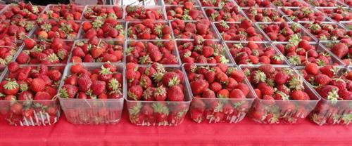 Gallery Image Strawberries.JPG