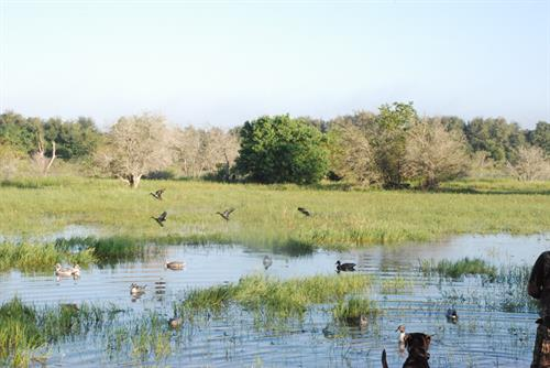 Pond Designs for your Ranch