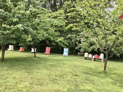 Resident bees produce honey and pollinate the Cranaleith gardens.