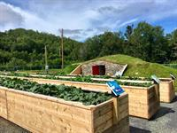 Farm & Market Growning Beds