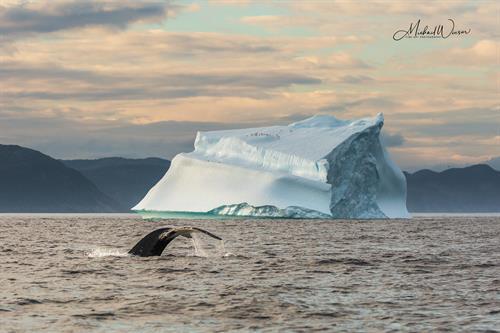 Whale & Iceberg
