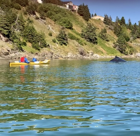 You will have a Whale of a Tail to tell after a kayaking tour with us.