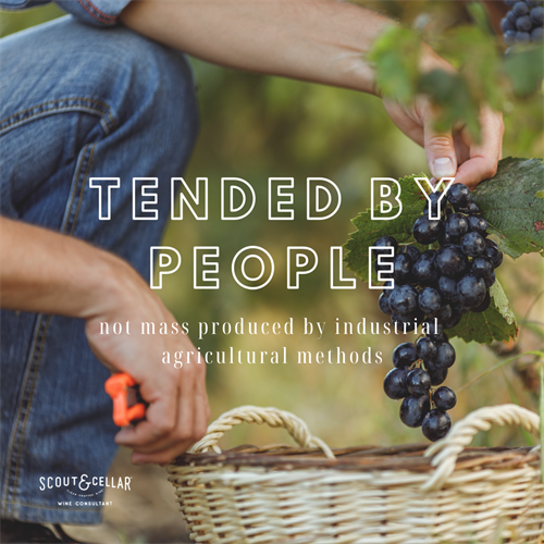 Tended by people.