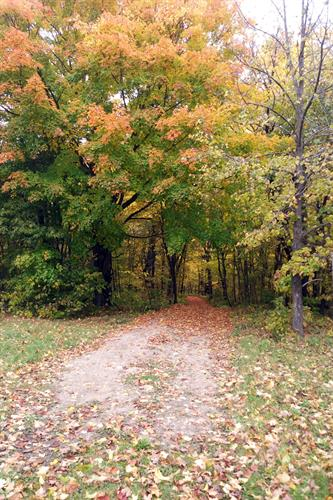 Our trail through the woods is so colorful during the fall!