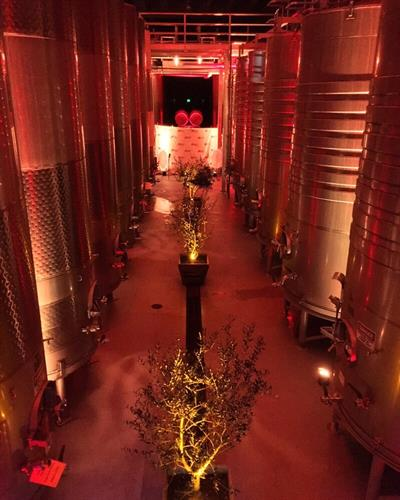 Up-Lighting at Francis Ford Coppola Winery. We can customize to any color for your event.