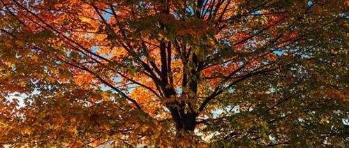 Gallery Image treees.jpg