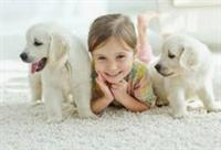 Keen Carpet Care