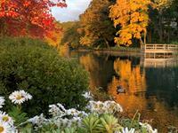 Baxter Estates in Fall