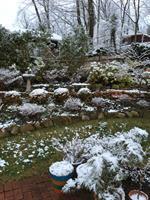 Baxter Pond in Winter