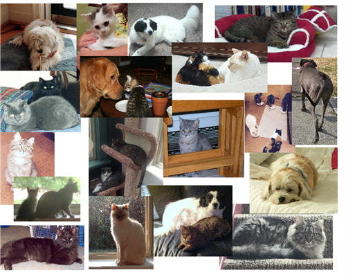 Some of the animals we've helped