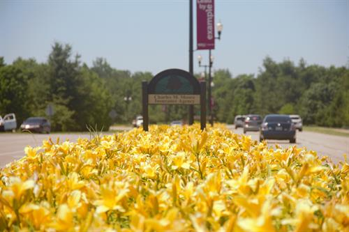 Yellow Daylilys with Partner Sign