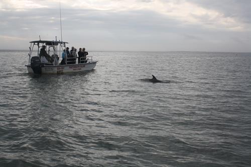 Dolphins on the ride back to Ocracoke