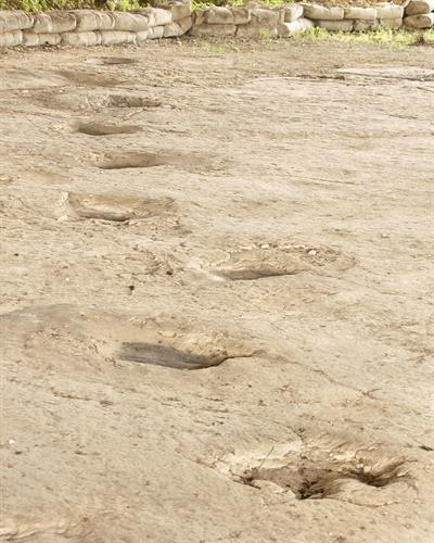 Dinosaur Tracks under our Pavilion