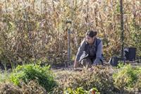 Garden Associate Volunteer at Oliver Kelley Farm