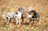 Puppy Socialization Classes- THREE DOG RANCH, Whitefish location