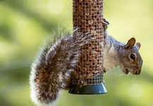 Gallery Image Cute_squirrel_hanging_on_metal_pole.jpg