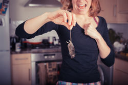 Gallery Image stock-photo-a-disgusted-young-woman-is-holding-a-dead-mouse-by-it-s-tail-in-the-kitchen-183373961.jpg