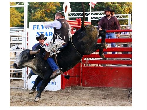 Gallery Image rodeo_bull2.jpg