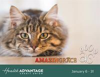 Health Advantage Credit Union is Collecting for Amazing Grace Animal Rescue