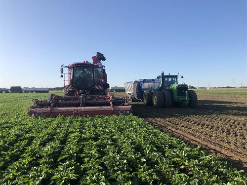 Michigan Sugar Company's nearly 900 grower-owners annually plant and harvest up to 160,000 acres of sugarbeets in 20 Michigan counties and Ontario, Canada.
