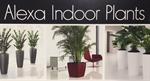 Alexa Indoor Plants, LLC