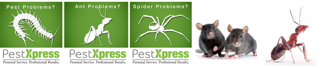 Pest Xpress
