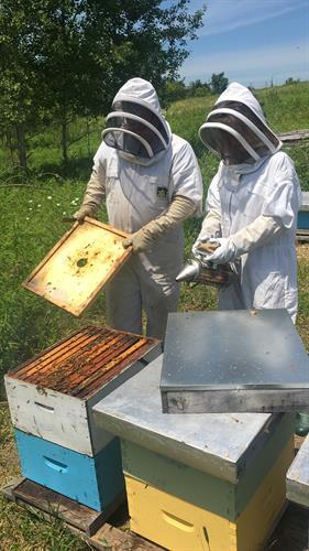 Gallery Image Moreroses_beekeeping.jpg
