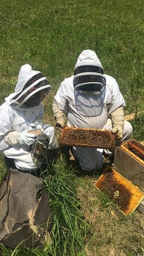 Gallery Image Moreroses_beekeeping_2.jpg