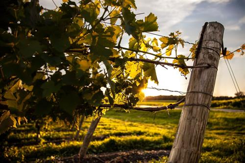 The food-friendly wines of the Finger Lakes include Riesling, Pinot Noir, Chardonnay, and more... all of which you'll find around the Seneca Lake Wine Trail.