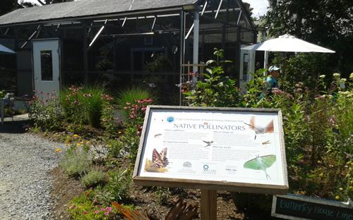 Museum of Natural History Pollinator Path-CARE grant