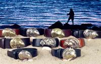 Oyster Belt Collection