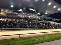 Limerick Greyhound Stadium