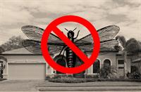 Drywood & Subterranean Termite Protection Plans