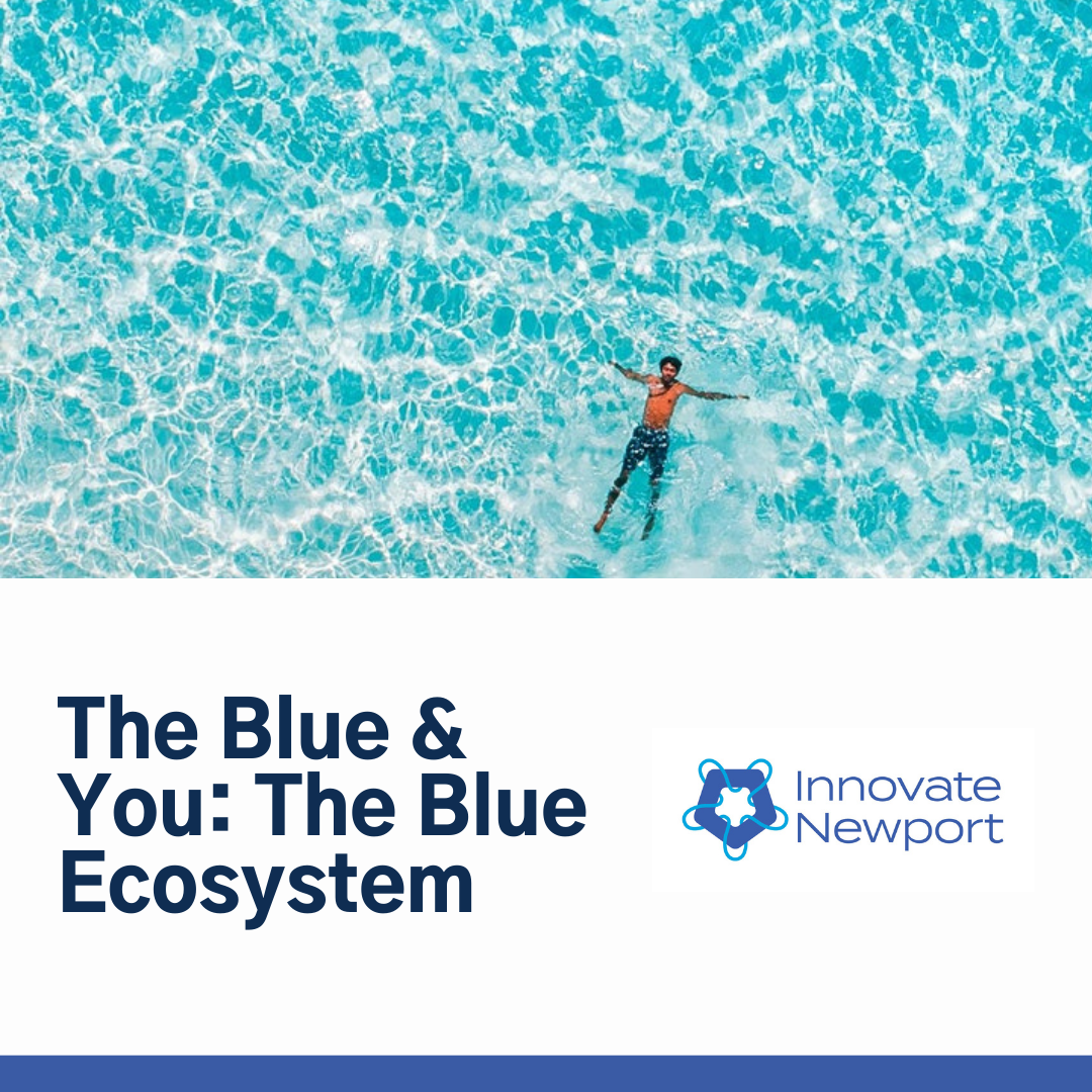 The Blue & You: The Blue Ecosystem