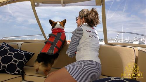 the dog days of newport helly hansen
