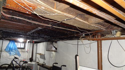 mold on ceiling joists