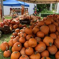Pumpkin Patch at St. Christopher's-By-the-Sea