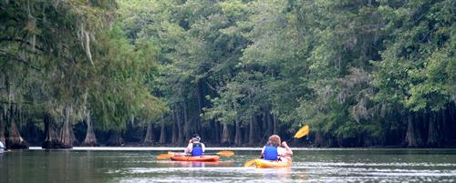 Kayaking Sparkleberry Swamp