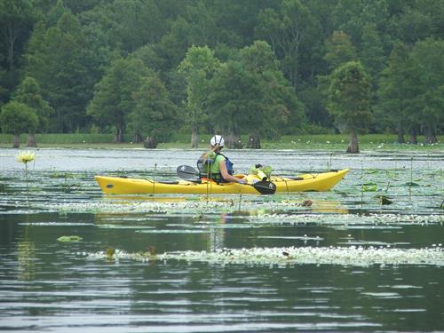 Kayaking Eutaw Springs