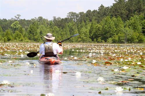 Paddling Lake Moultrie Dennis Pasture