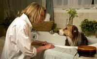 'Darling Companion' Film Encore