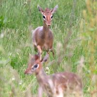 Award-winning Yorkshire Wildlife Park welcome a new family of unique antelopes