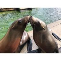 A colony of sea lions set to become TV stars as they prepare for big move to Yorkshire Wildlife Park