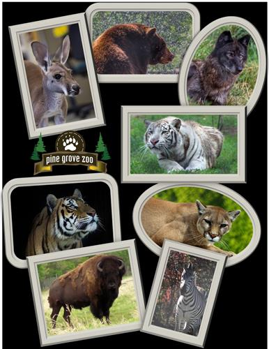 Gallery Image Collage_of_animals.jpg