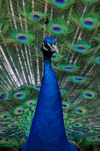 Gallery Image HS_Blue.jpg