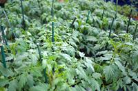 Vegetable and herb plants