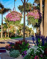 Venice In Bloom Team creating gorgeous flowers/flower pots/sculptures
