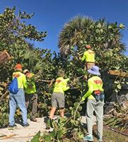 Team KVB cleaning up trees and debris from parks and beaches