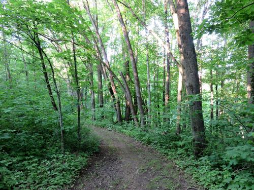 Woodland trails at Maple Wood Lodge